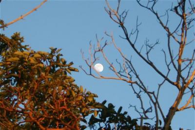 Arbutus moon.jpg