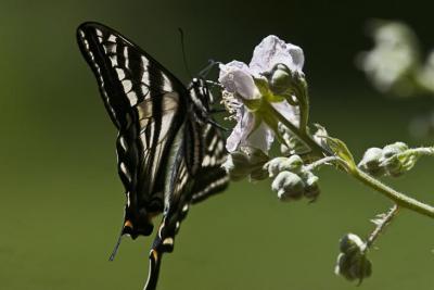 Butterfly_1-2.jpg
