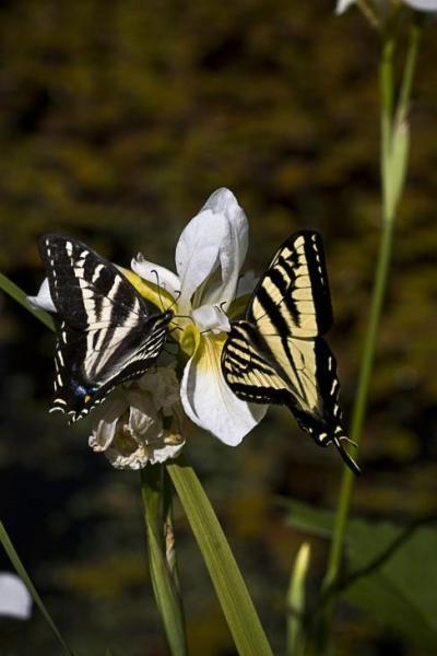 Butterfly_1-4.jpg