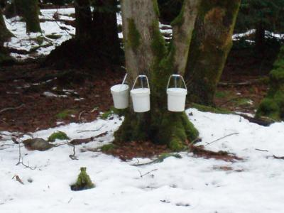 Maple Sugaring,Jan 2009 001.jpg