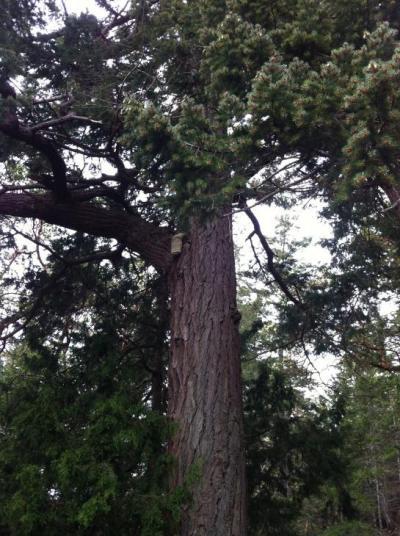 rare mushroom Agarikon found during LINC's 2016 walk to Ecoreserve