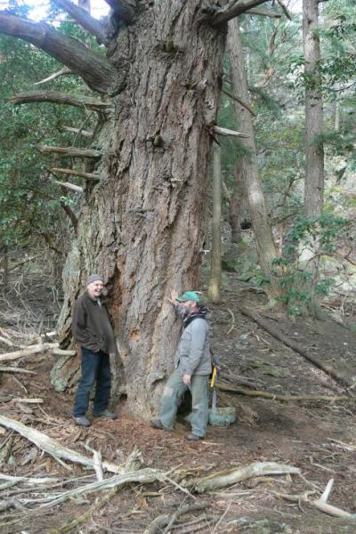 Ecoreserve - Al and Gordon looking at a giant Douglas fir