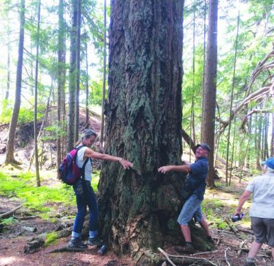 Squitty View - Gretje and James hug a big tree at Squitty Bay Day 2015