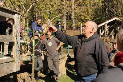 Pruning Demonstration