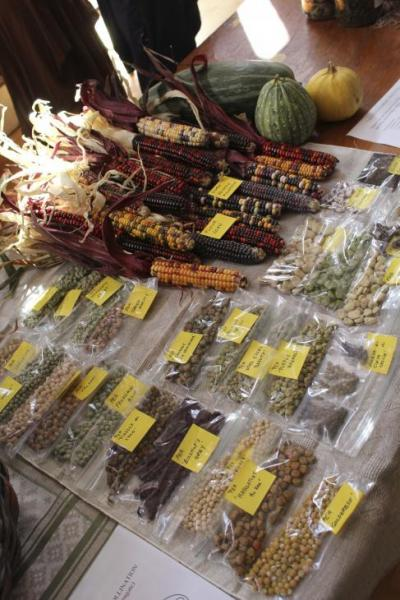 Corn and Legumes