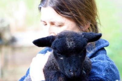 lamb_rescue.JPG