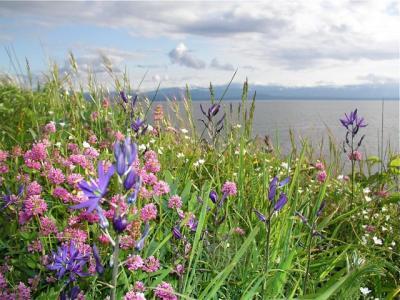 sangster wildflowers.jpg