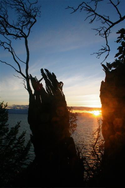 stump sunset.jpg