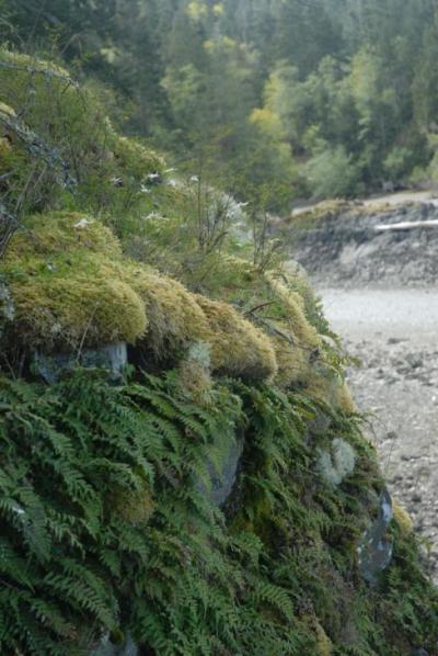seaside moss