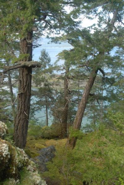 Tucker Bay view