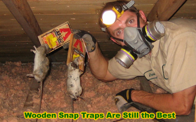 Wooden snap traps are still the best