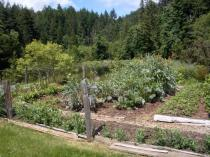 Market Garden at Driftwood Cove